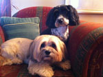 Dog Grooming in a home environment