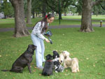 Dog Training at Love Your Pet