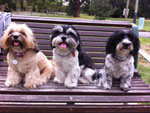 Dogs love to socialise Melbourne