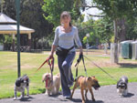 Group Walking Dogs by Love Your Pet