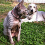 Pet Care including Home Visits by Ursula Juffermans