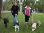 Walk in Park with Love Your Pet